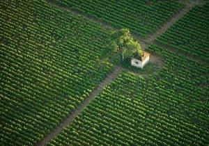 Peregrinación gastronómica en Borgoña