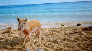 6 actividades imperdibles en islas Ábaco