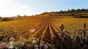 5 experiencias para saborear Borgoña