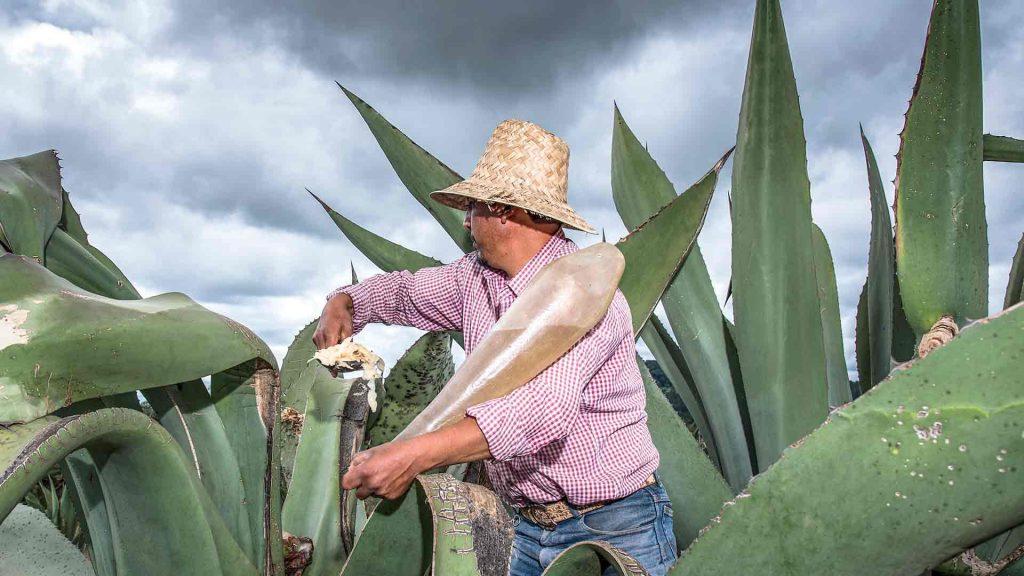 Sigue la ruta del pulque en Tlaxcala