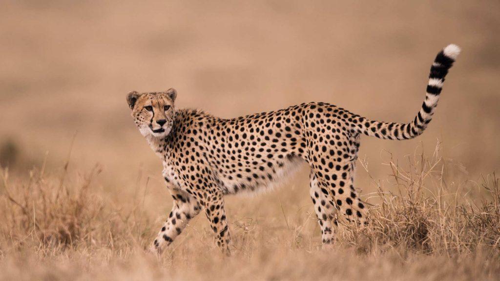 Safari en Kenia: al encuentro de los Masái