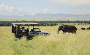 Tips de fotografía para ir de safari