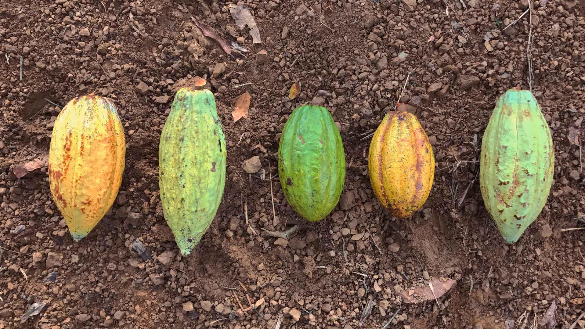 Xkik': chocolate de origen 100% mexicano