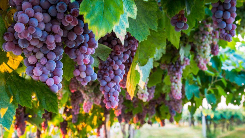 5 vinos de España que debes probar
