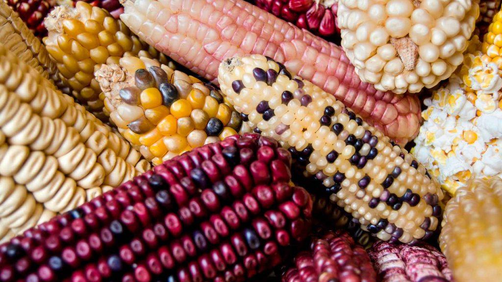 Un paso más allá para la gastronomía mexicana