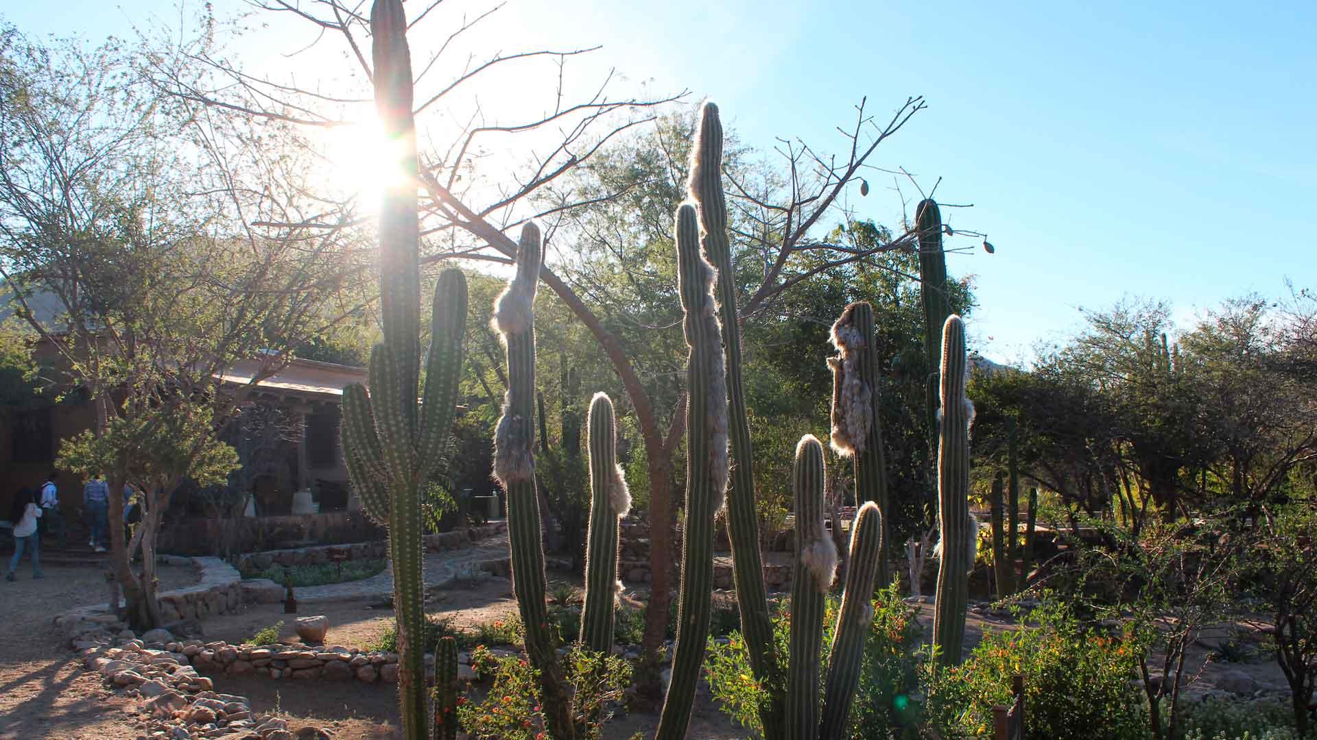 El sur de Sonora en 10 imágenes