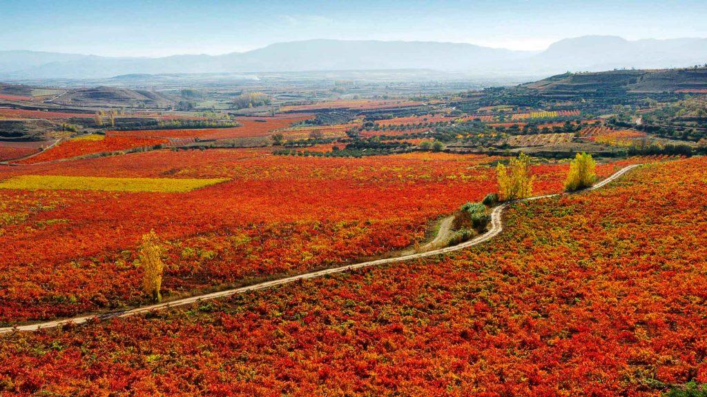 ¿Por qué preferir los vinos de Marqués de Murrieta?