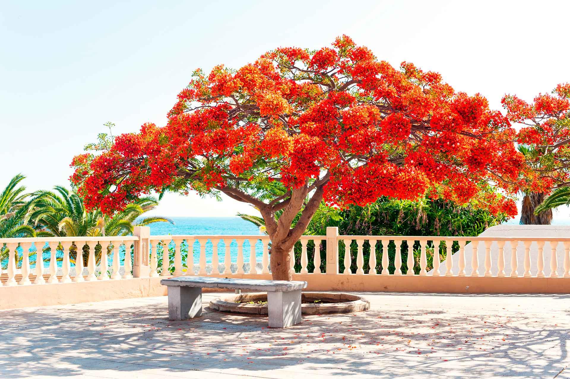 árboles de primavera