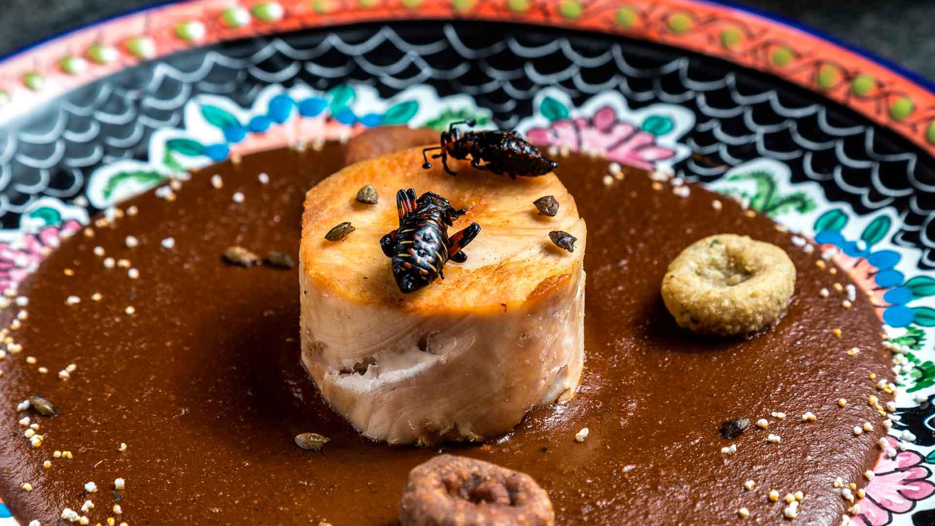 Bichos al Plato III, un festín de insectos