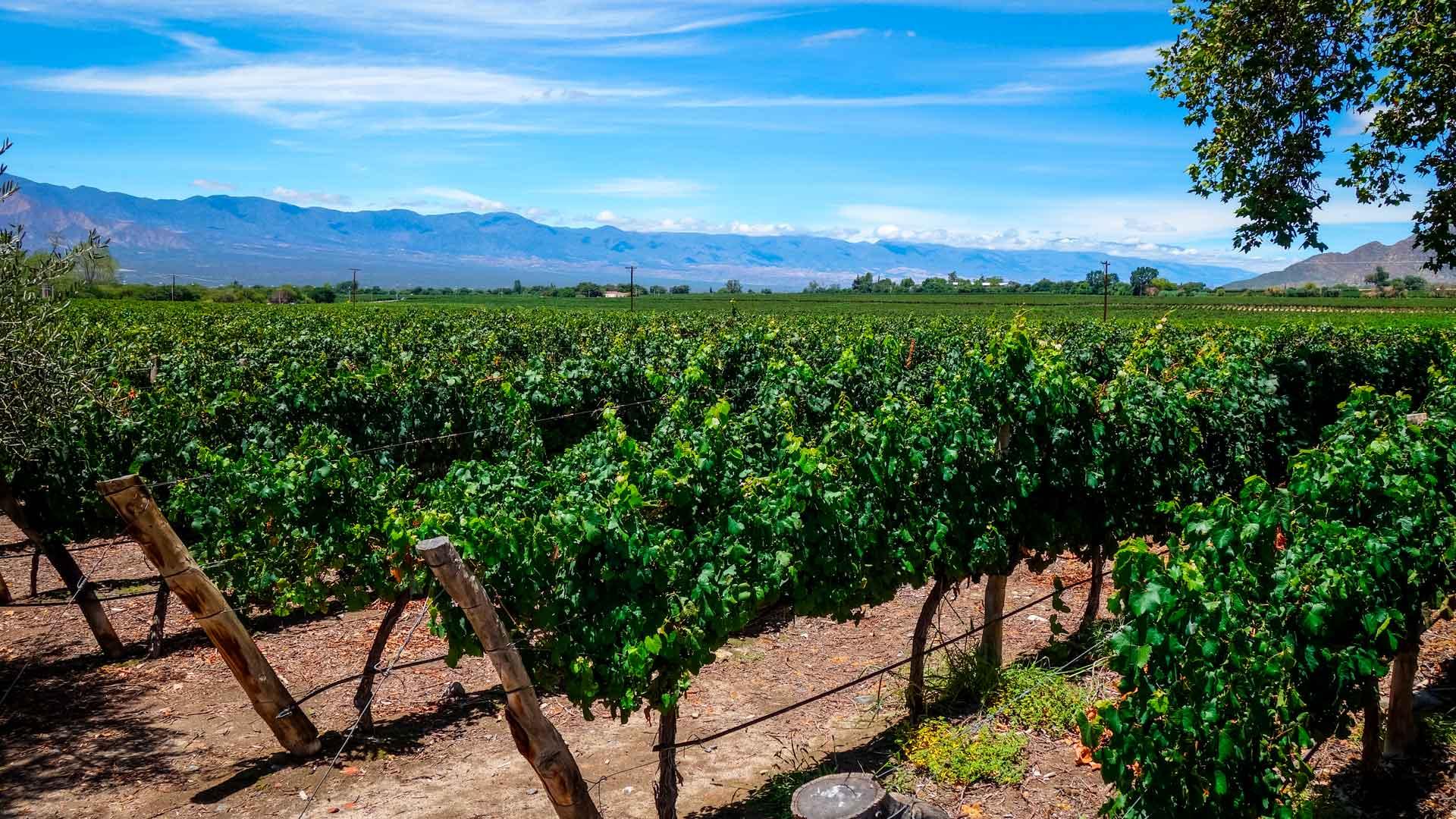 Bodega Colomé, los viñedos más altos del mundo