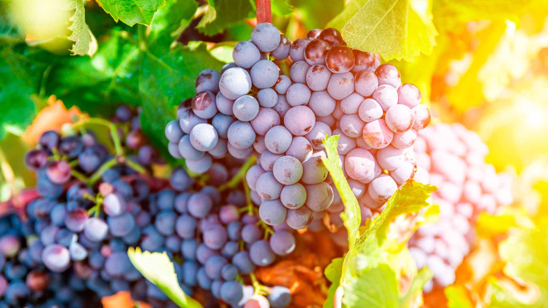 Tres vinos de bodega Palacios Remondo que debes probar