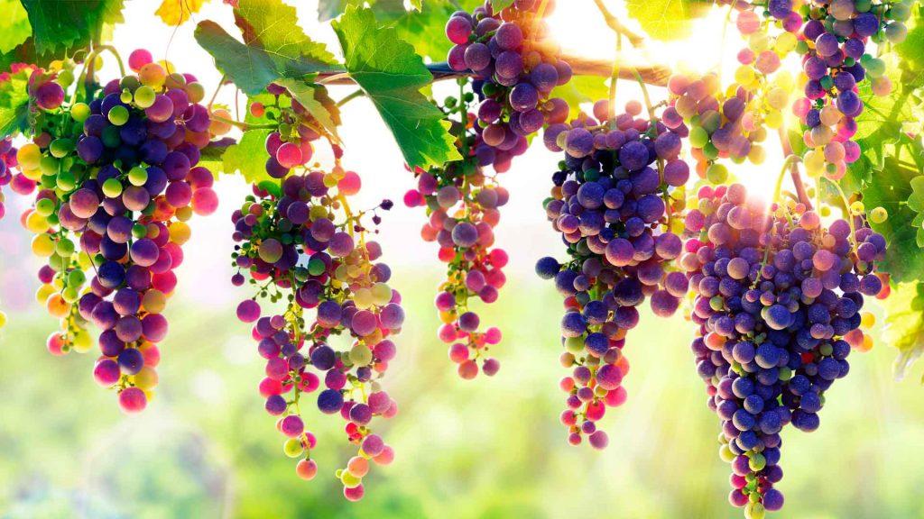 Vino mexicano llega al top 10 del Concours Mondial de Bruxelles