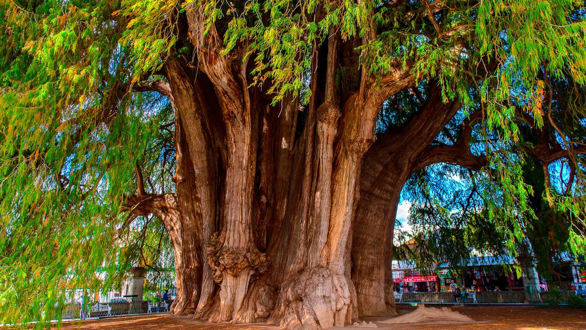 Los árboles más sorprendentes del mundo