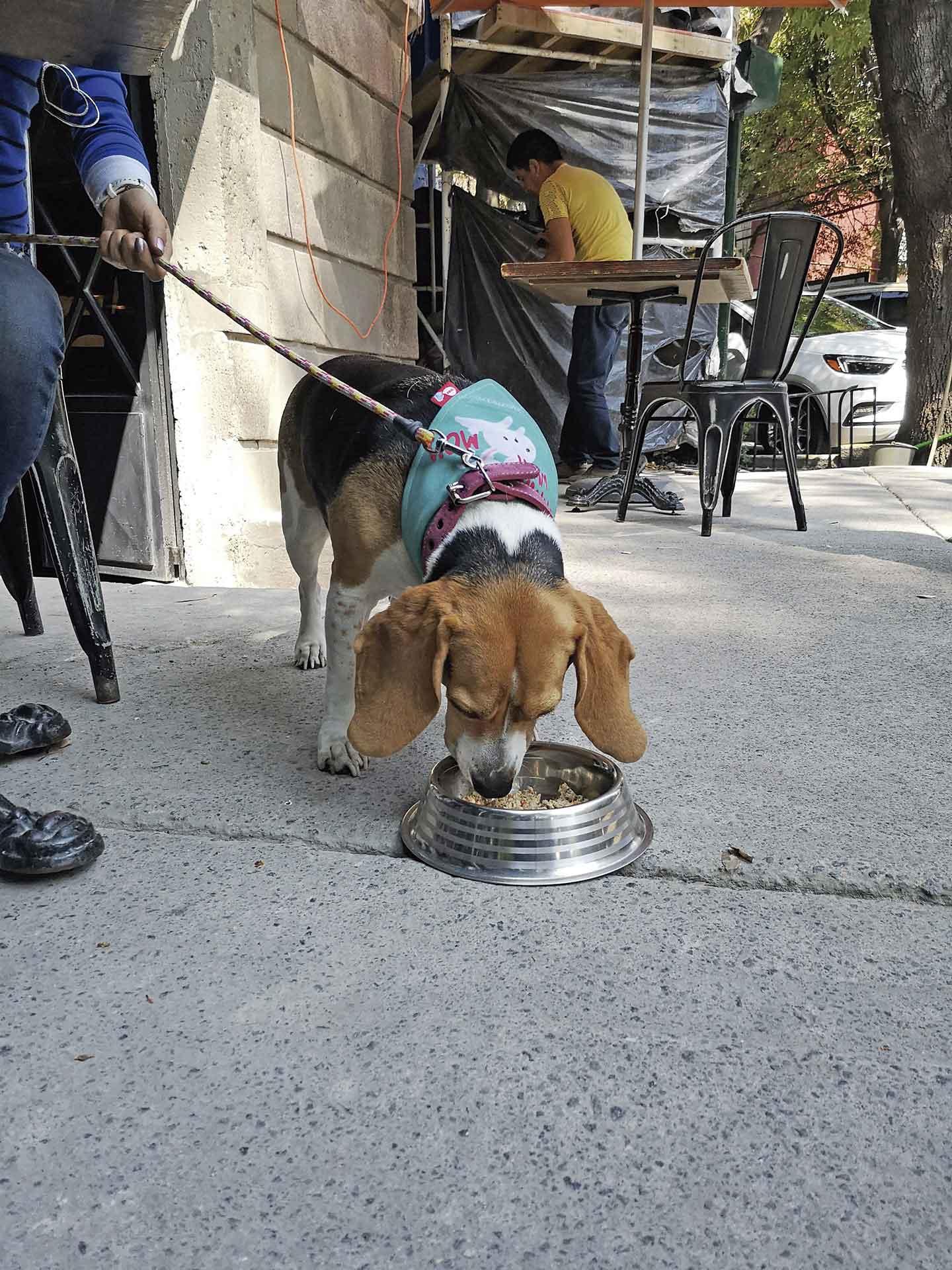 Menú canino