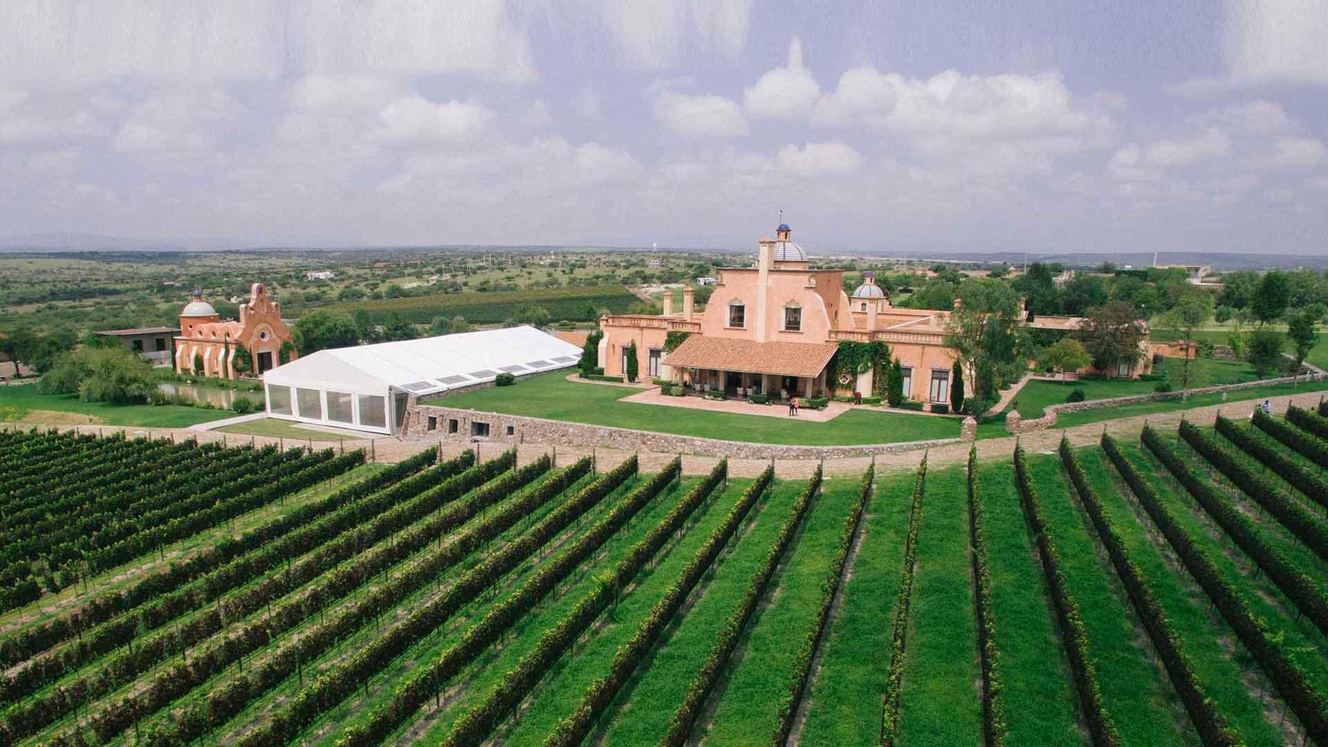 5 vinícolas de Guanajuato para celebrar las Fiestas de la Vendimia