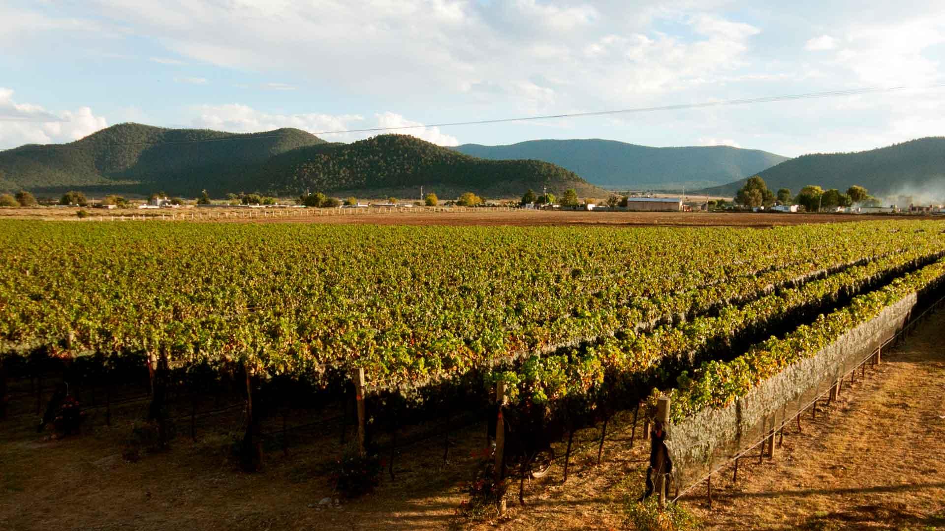 Conoce la nueva ruta del vino en Saltillo