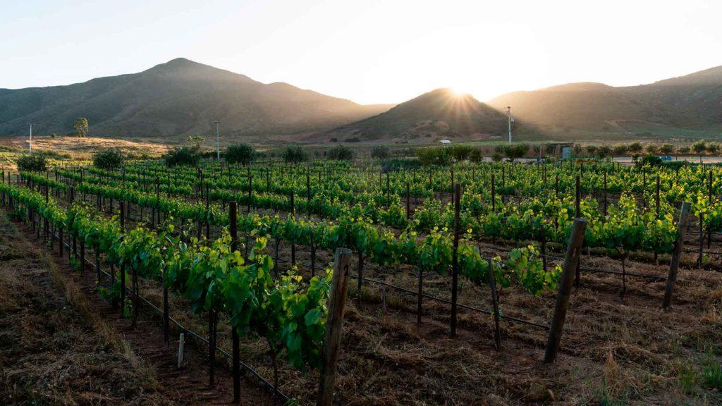 8 vinícolas de Baja California para disfrutar en las fiestas de la vendimia