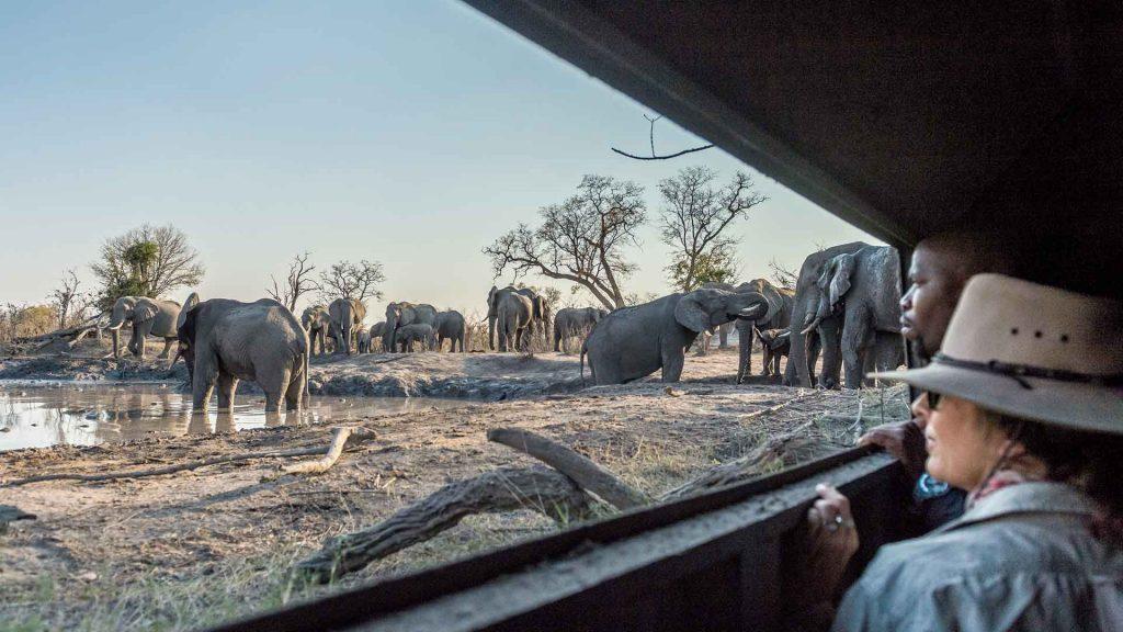 6 experiencias de safari en África