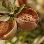 Almendras: snack delicioso y saludable
