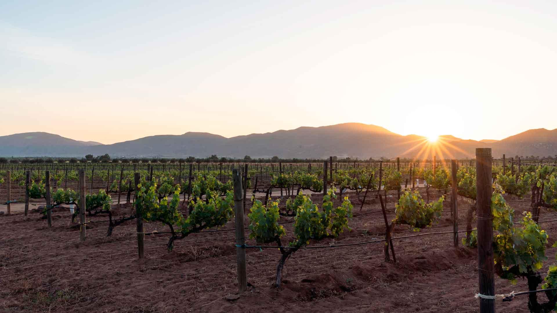 Conoce Gran Ricardo, uno de los grandes vinos mexicanos