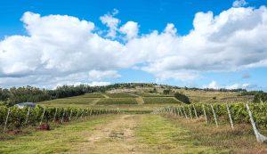 El tannat y otros vinos uruguayos