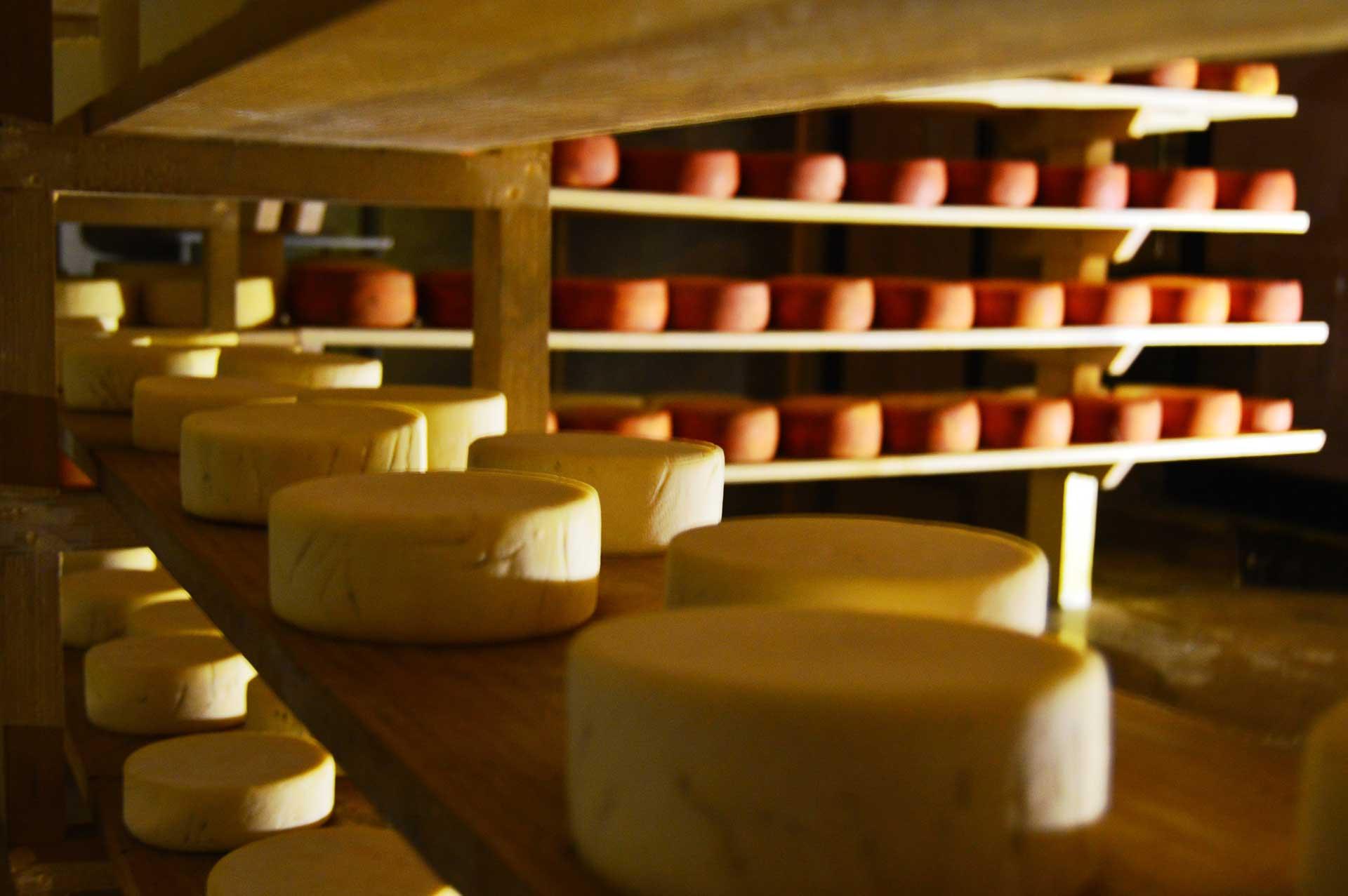 Viva el queso