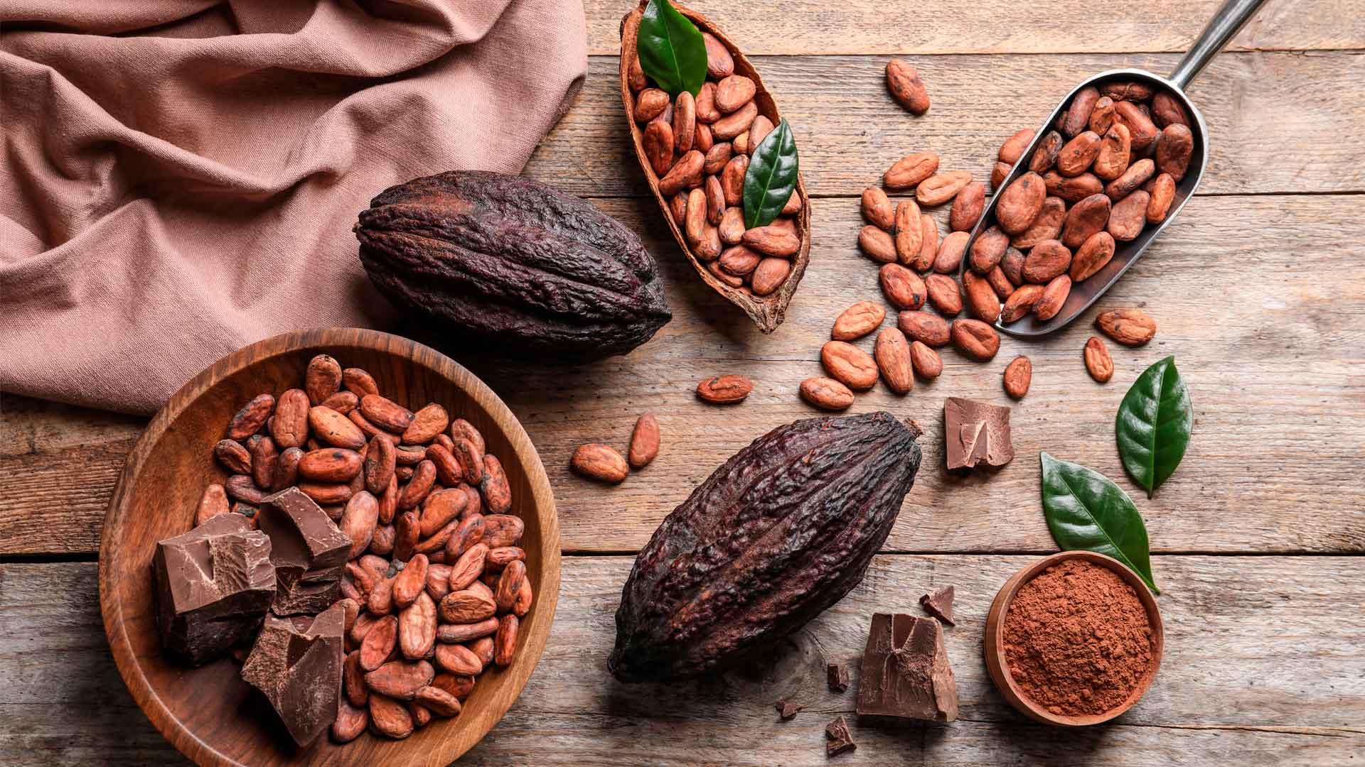 Festival del Chocolate en Tabasco: tributo al cacao