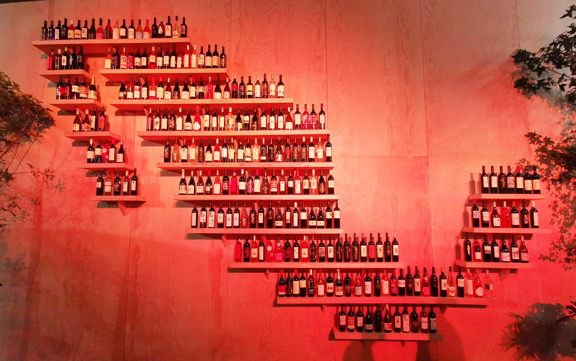4 vinos que disfrutamos en Nación de vinos
