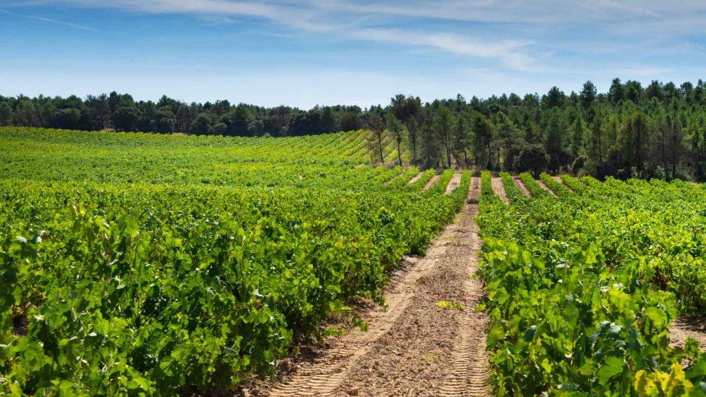 Ribera del Duero: 5 vinos que te emocionarán