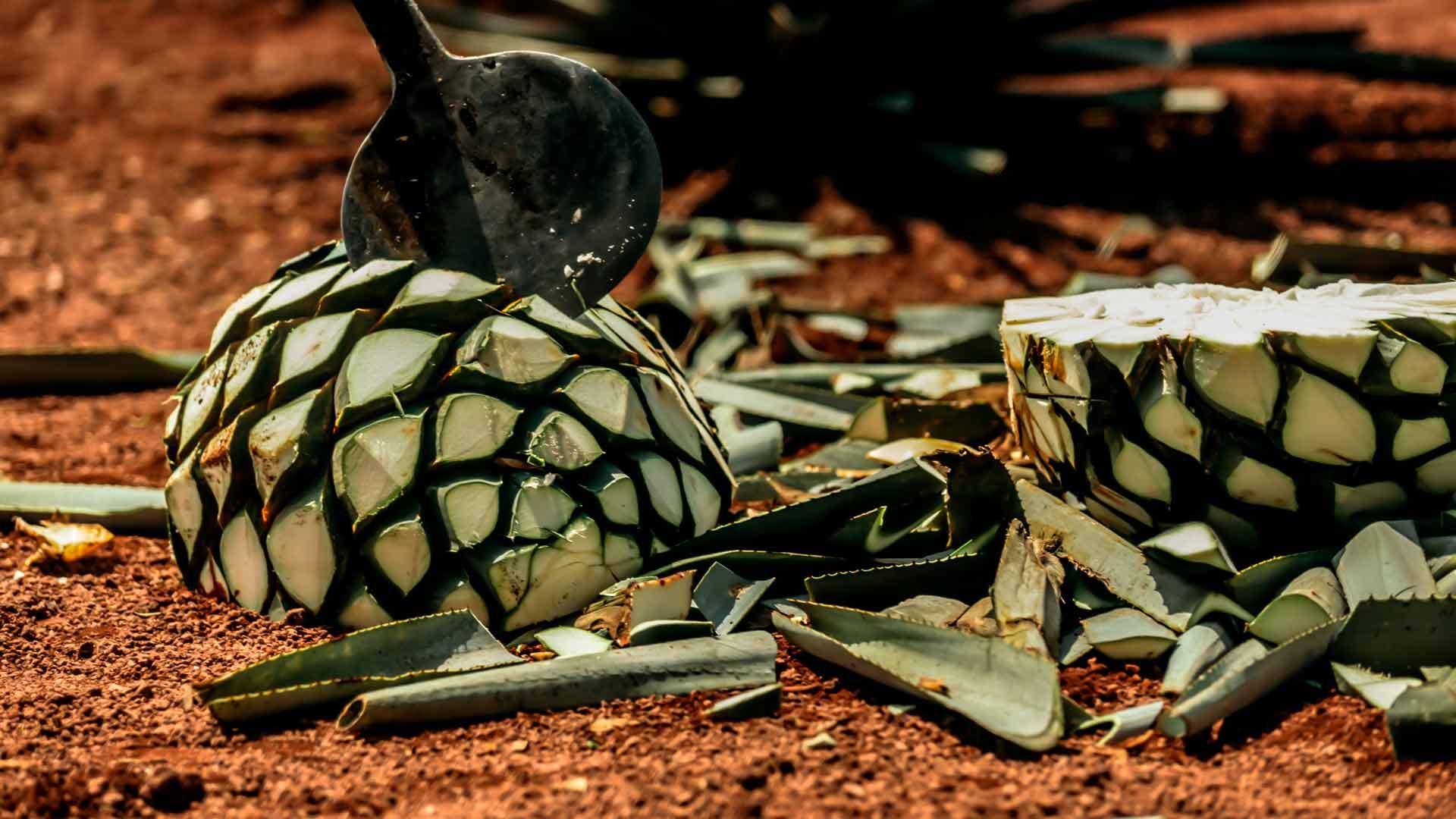 Las Garrafas presenta su tequila Premium