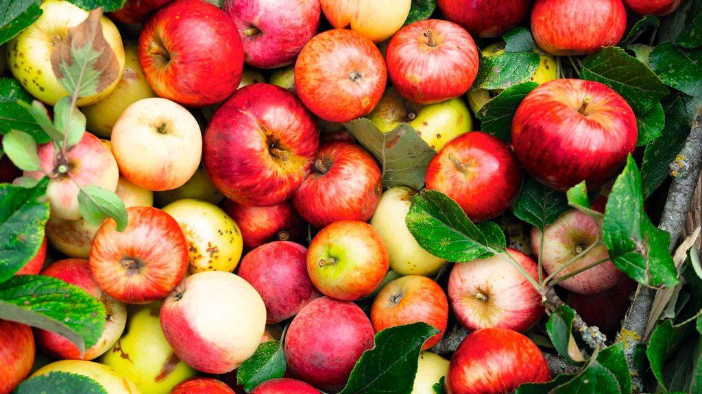 Manzanas, jugosa tentación