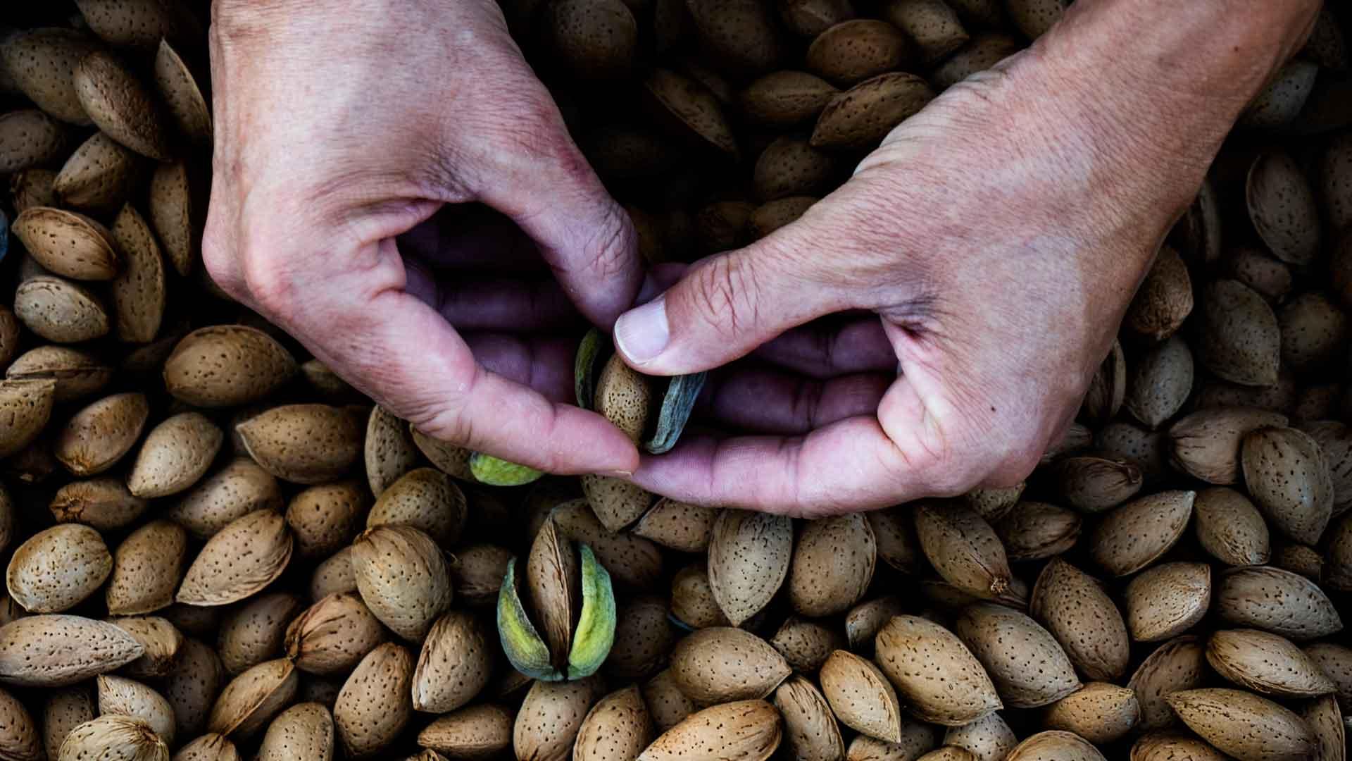 Almendra: fruto ancestral