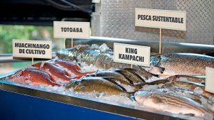 Descubre la Pesca de Autor en Fisher's