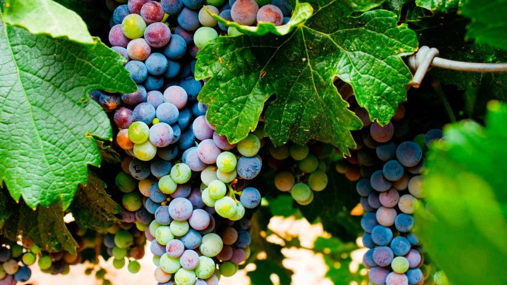 6 vinos para degustar la Ribera del Duero