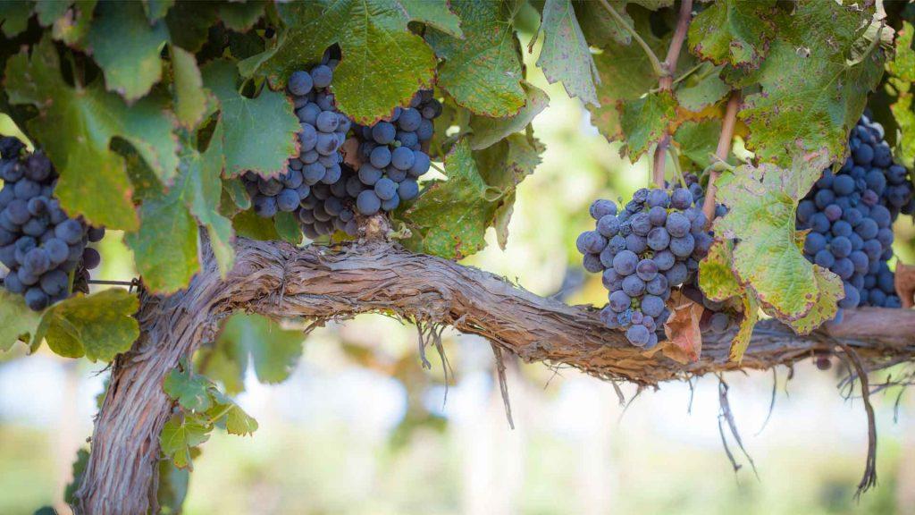5 vinos mexicanos que debes probar