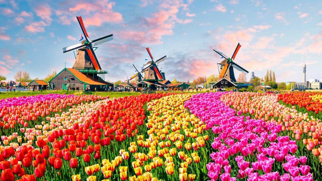 Campos de flores en el mundo