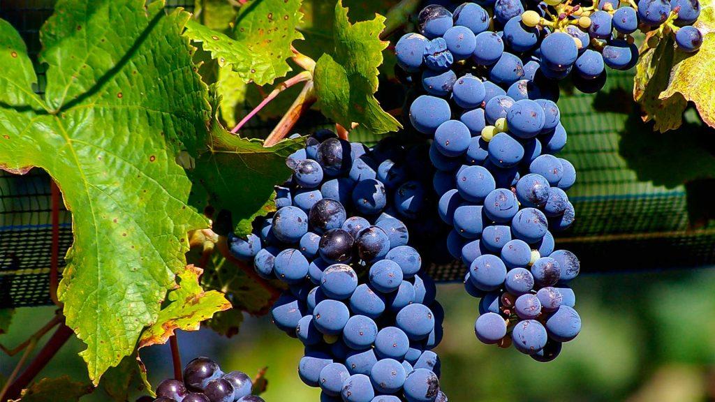 Celebra el Día Mundial del Malbec con una buena copa de vino