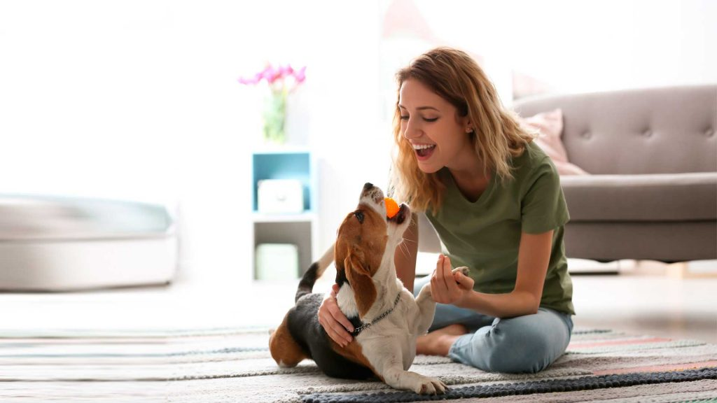 Actividades en casa para mantener activo a tu perro