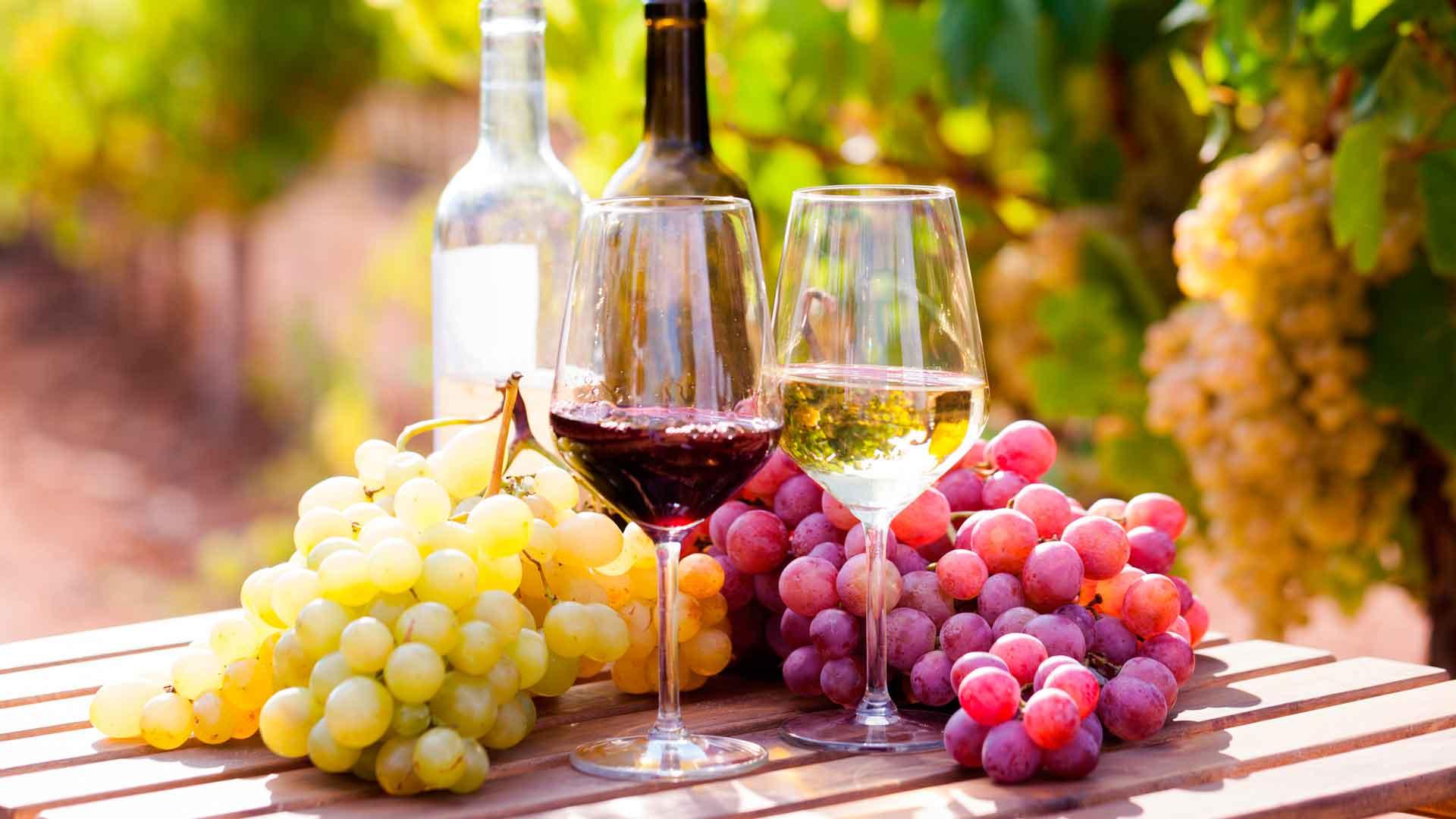 Vinícolas unidas: en apoyo al vino mexicano