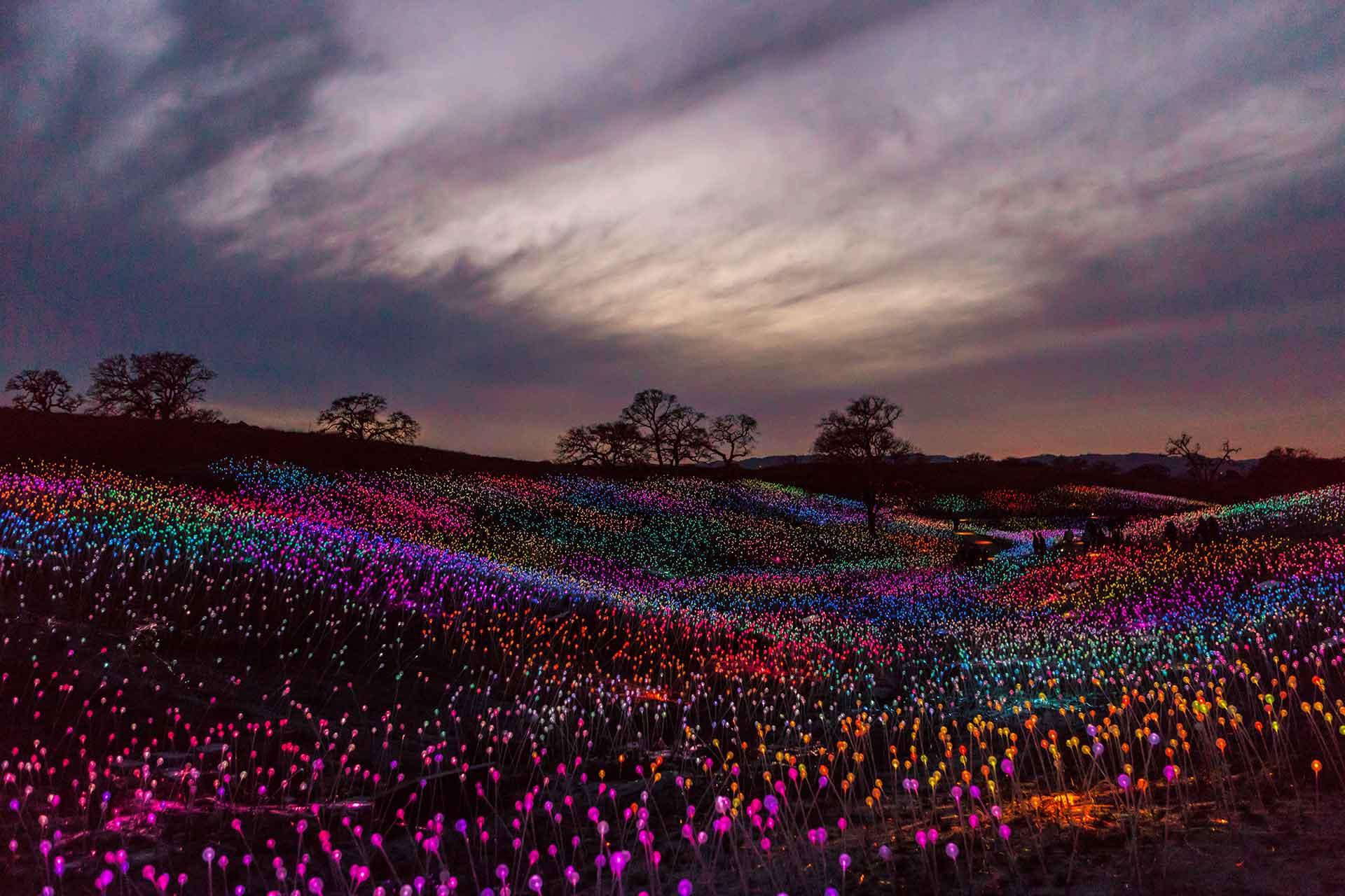 California-Field-of-Light