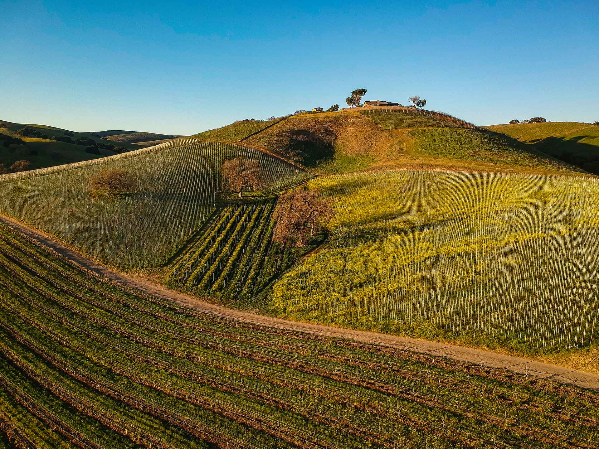 Stolpman-Vineyards