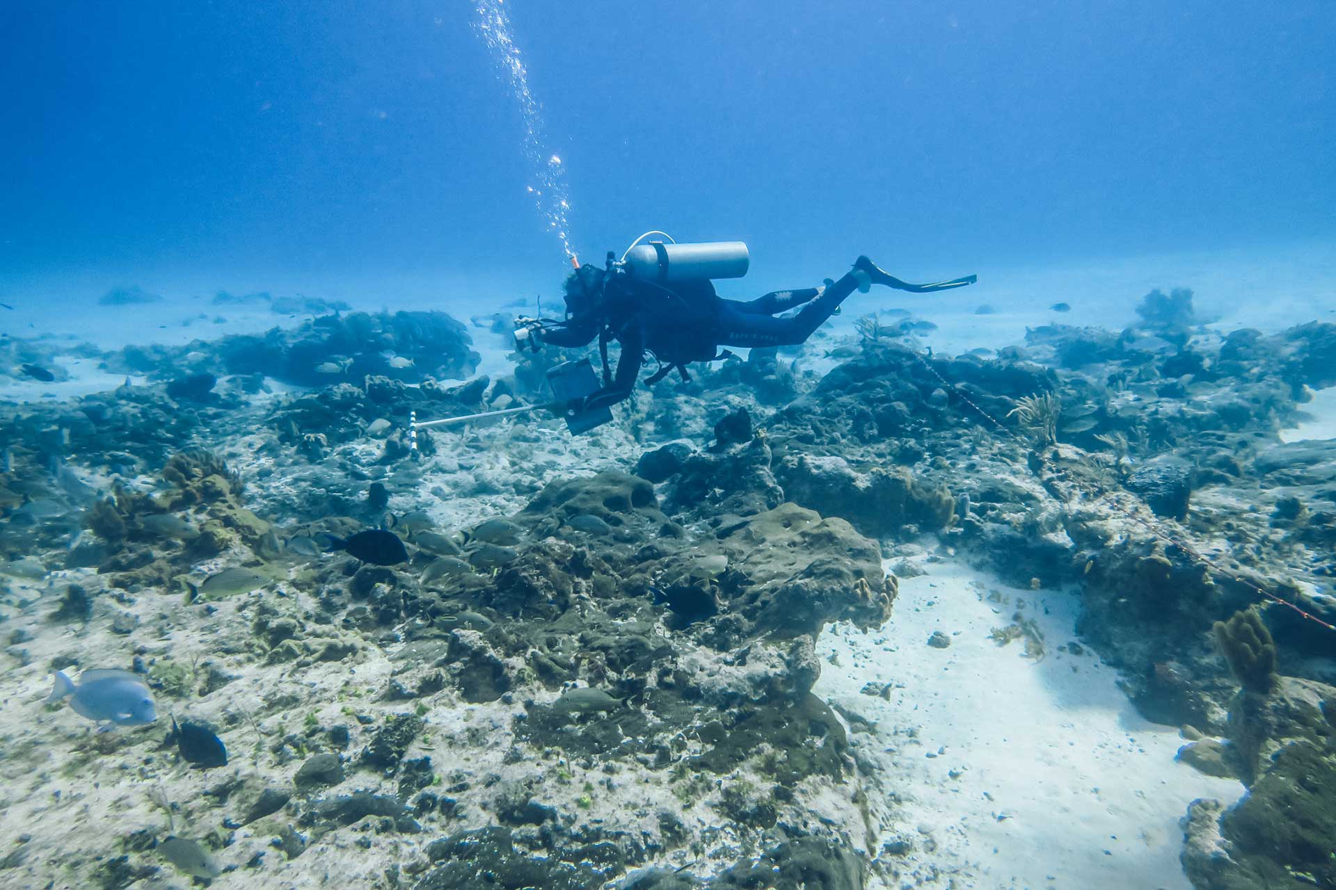 Iberostar Arrecifes de coral