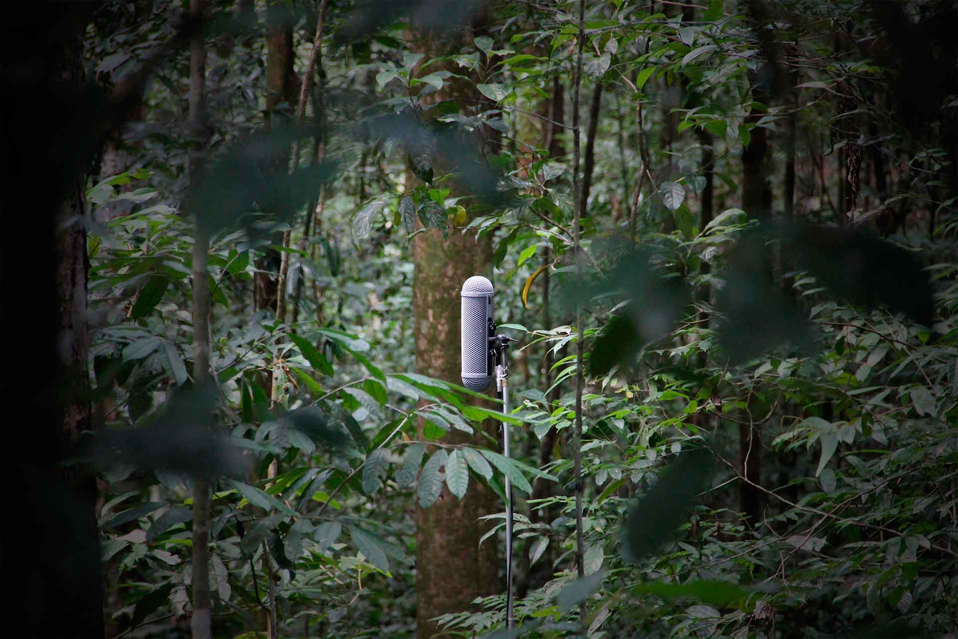 Bosques del planeta