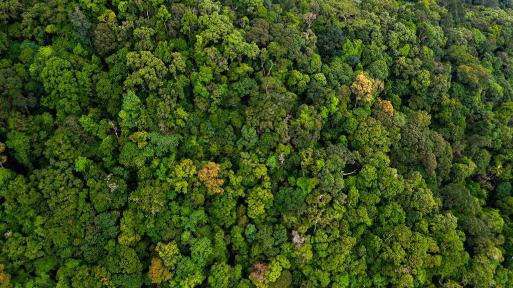 Escucha a qué suenan los bosques del planeta en Fragments of Extinction