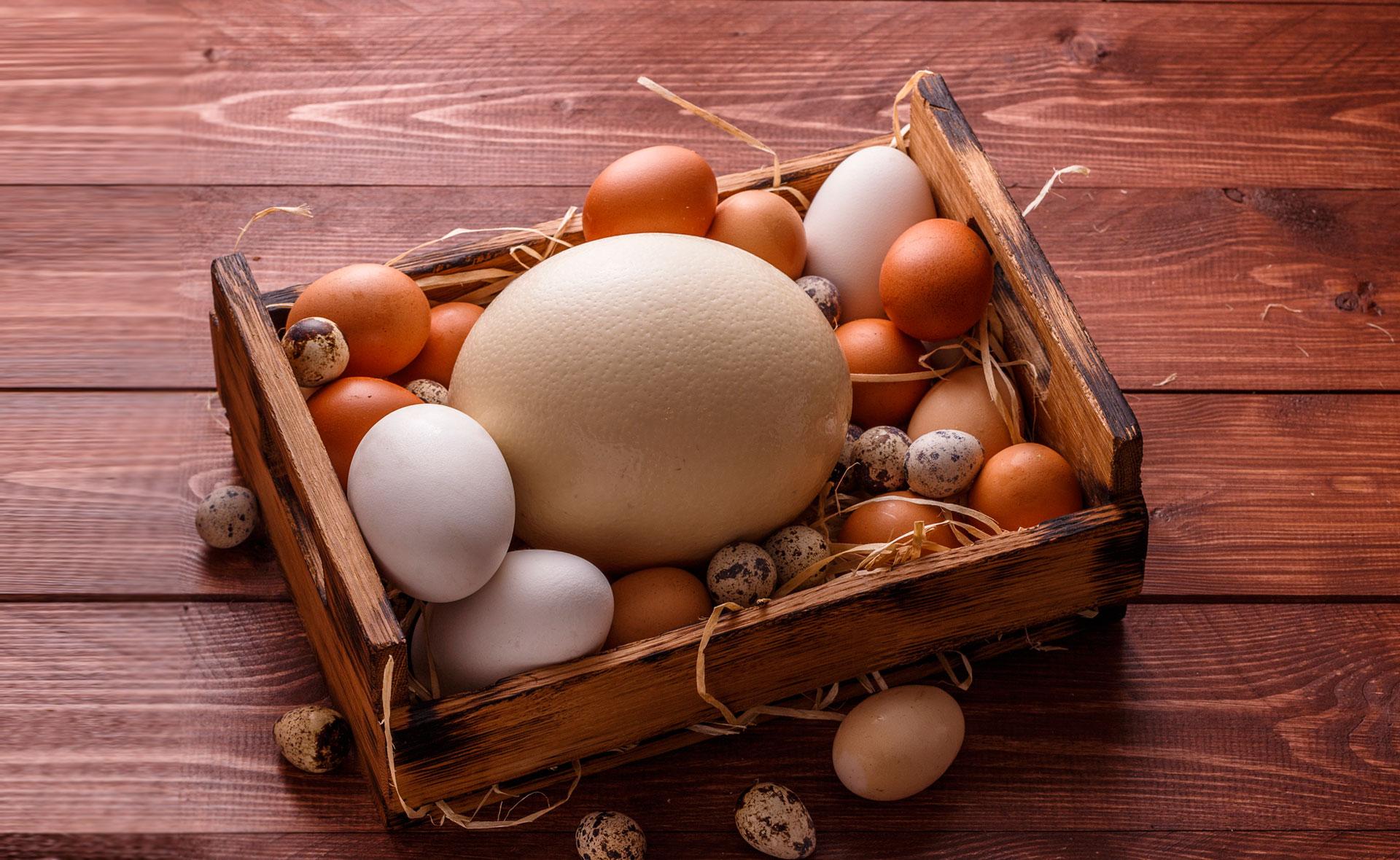 Huevos: más allá de los de gallina