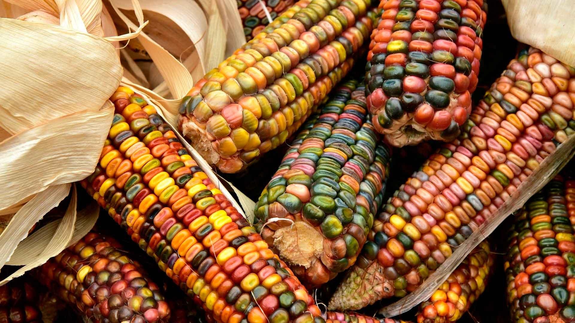 México tendrá su primer museo interactivo de gastronomía