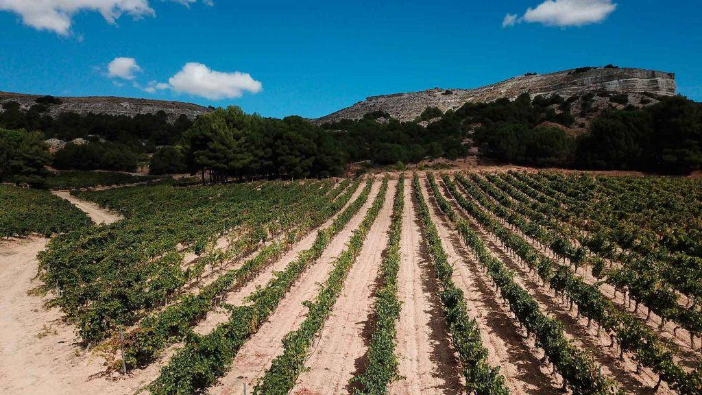 The Best of Ribera del Duero: 75 vinos, 5 sentidos y una gran experiencia