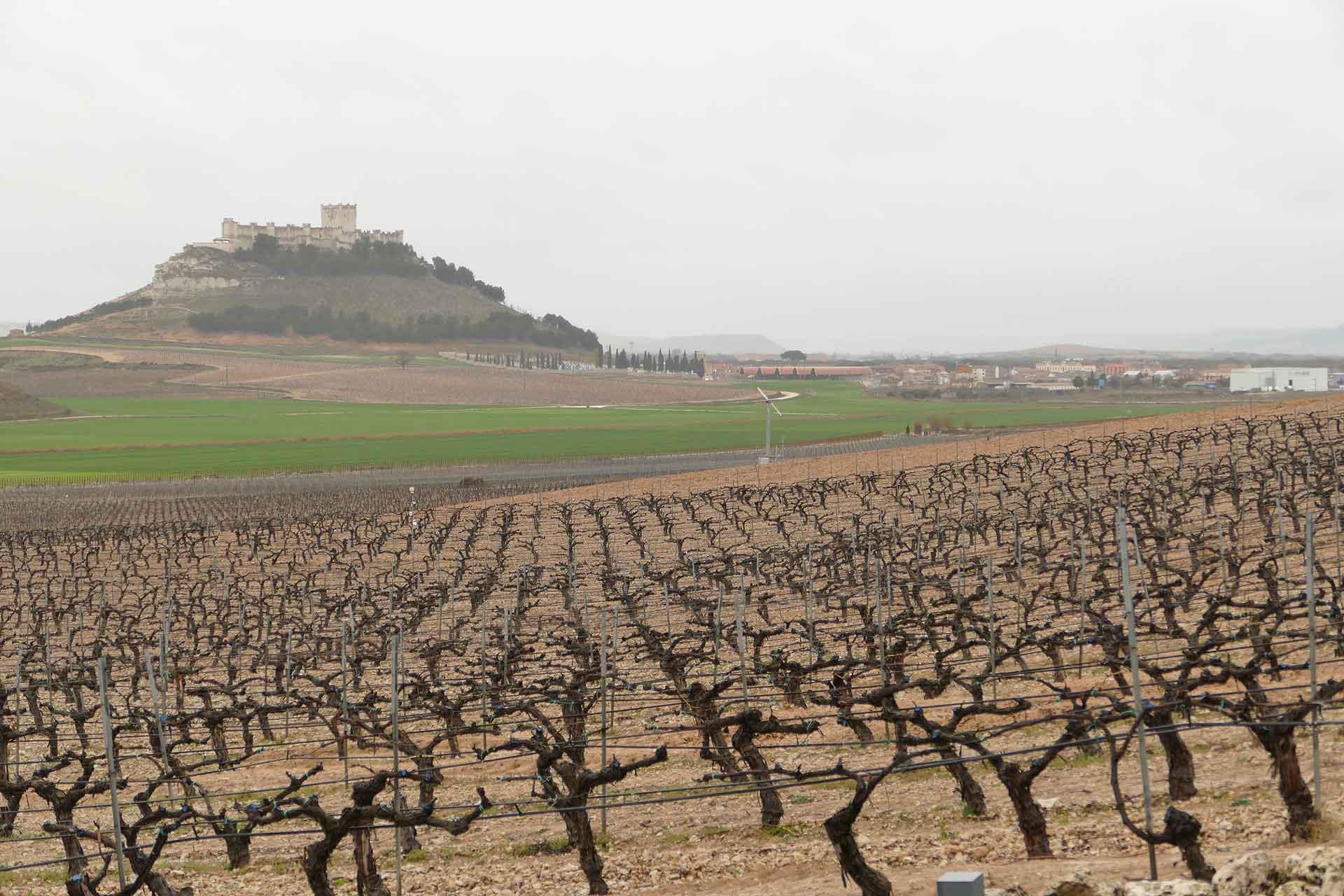Best of Ribera del Duero