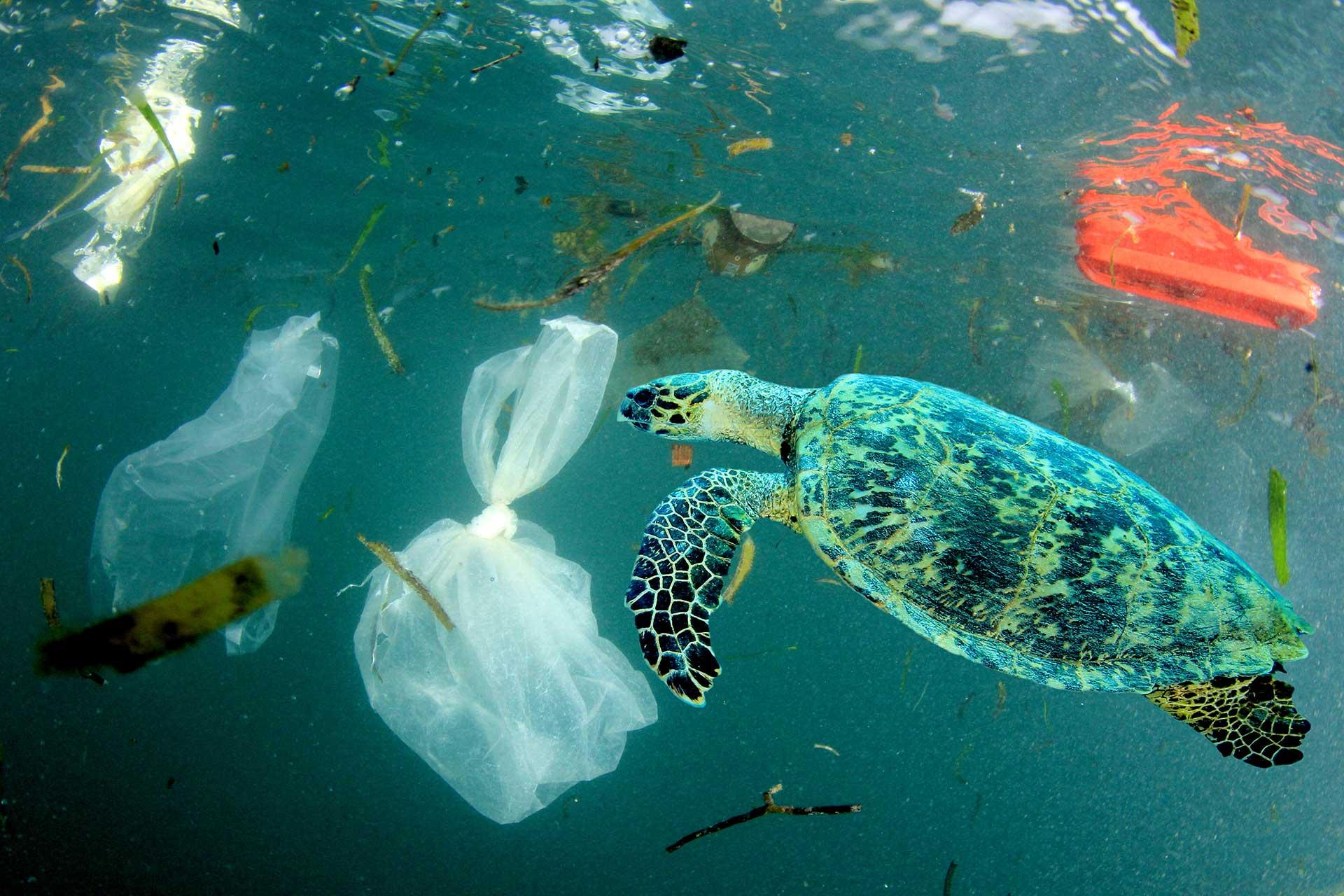 Bolsas de plástico medio ambiente