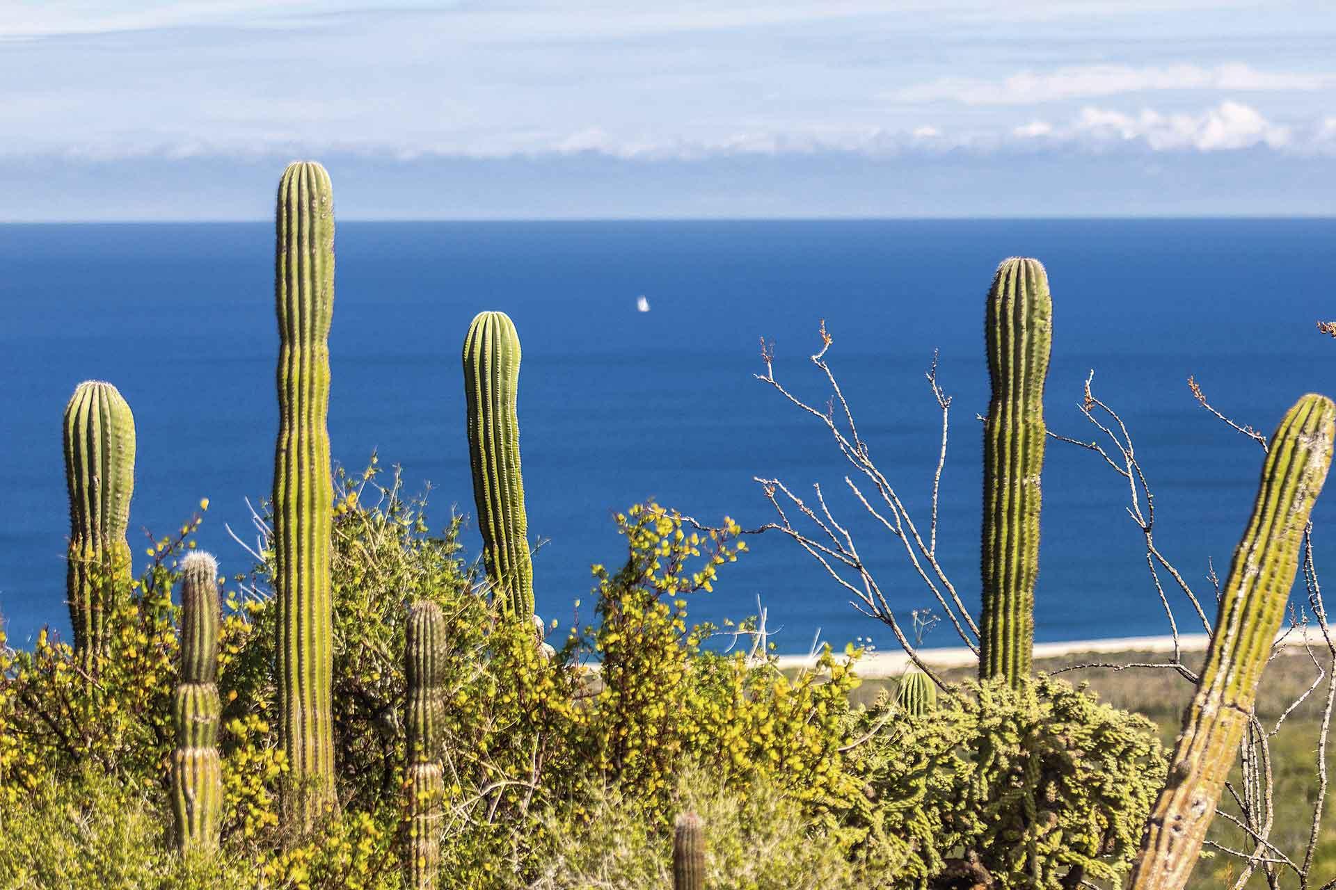 La Paz Baja California